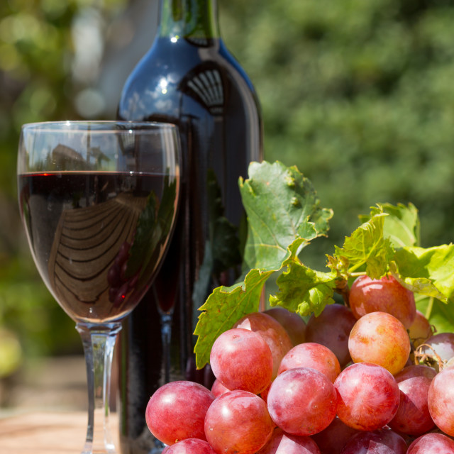 """Wine grapes"" stock image"