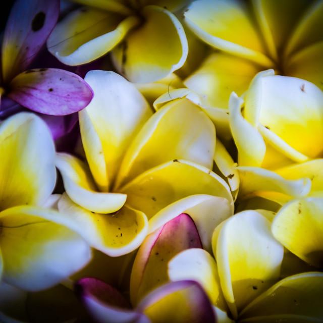 """Bali Flowers"" stock image"