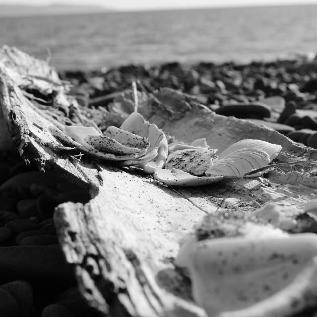 """""""Seashore II"""" stock image"""