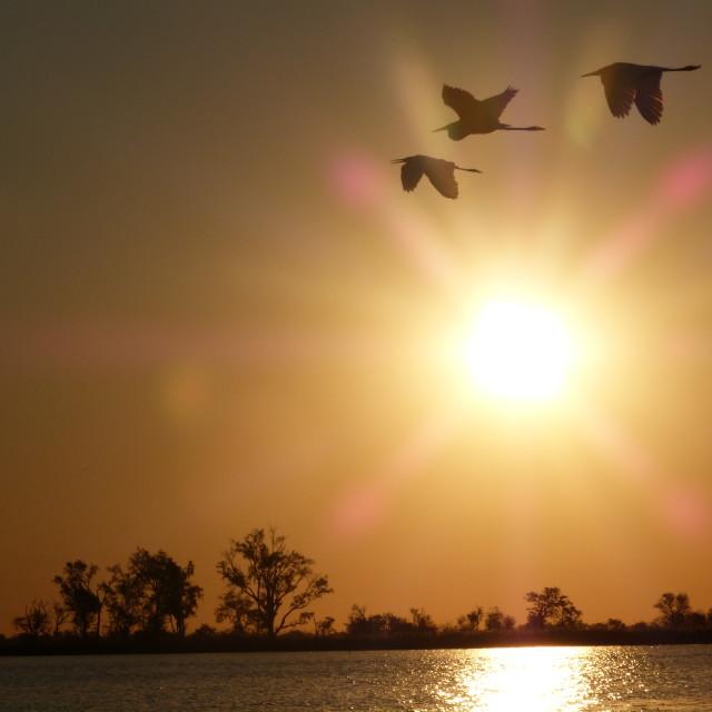 """""""Okavango Sunset II"""" stock image"""