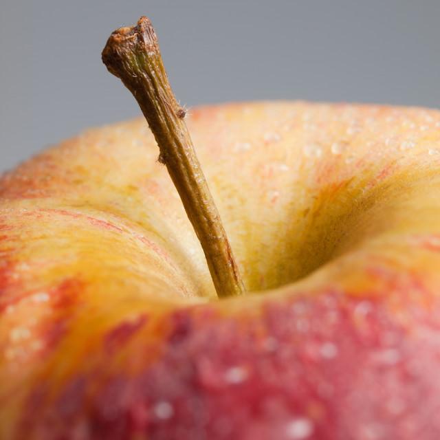 """Apple stalk detail"" stock image"
