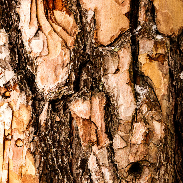 """Beautiful bark pattern for background"" stock image"