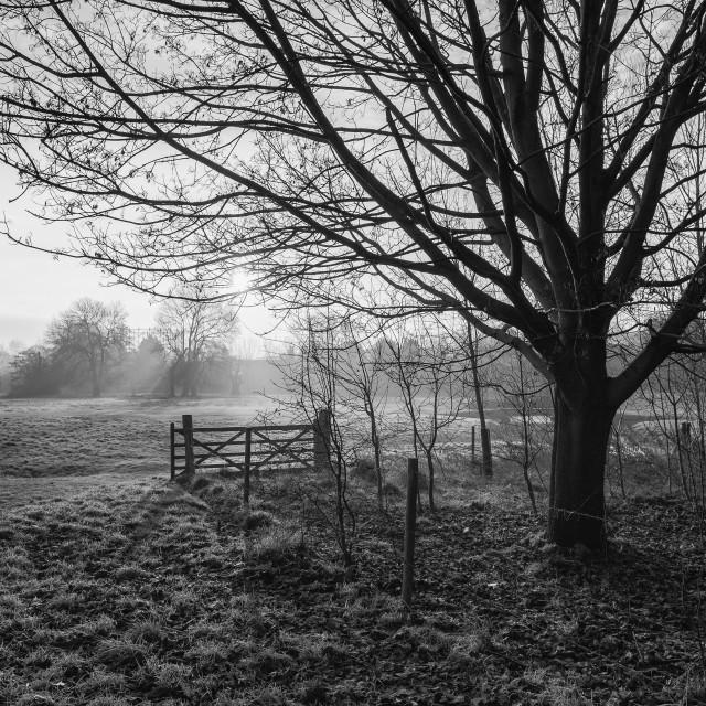 """Monochrome on Harding's Moor"" stock image"