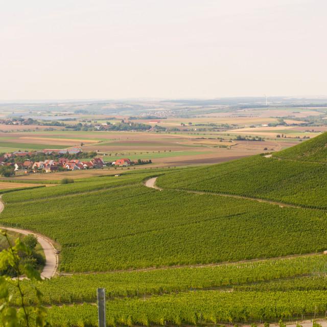 """""""Winegrowing"""" stock image"""