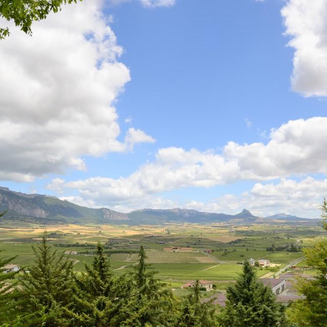 """Vineyard landscape"" stock image"