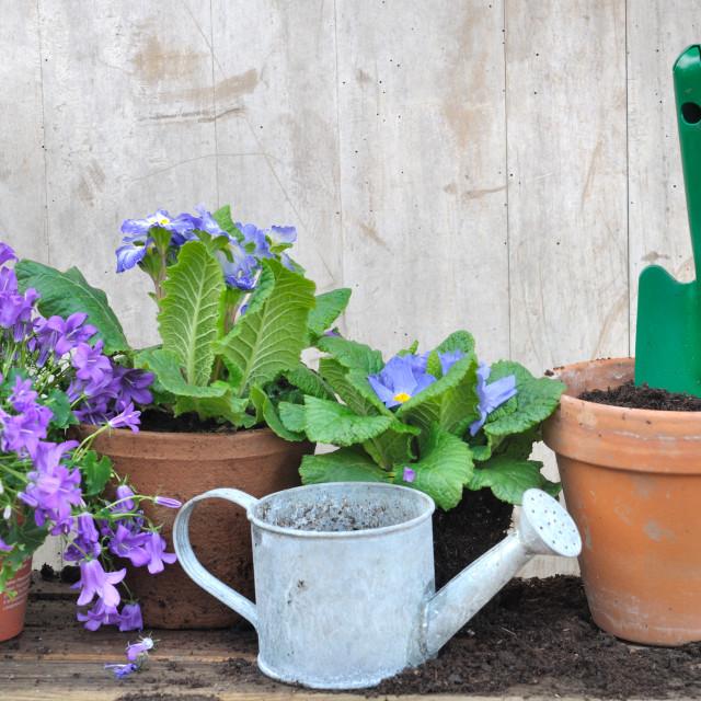 """potting flowers"" stock image"