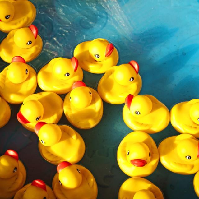 """rubber ducks"" stock image"