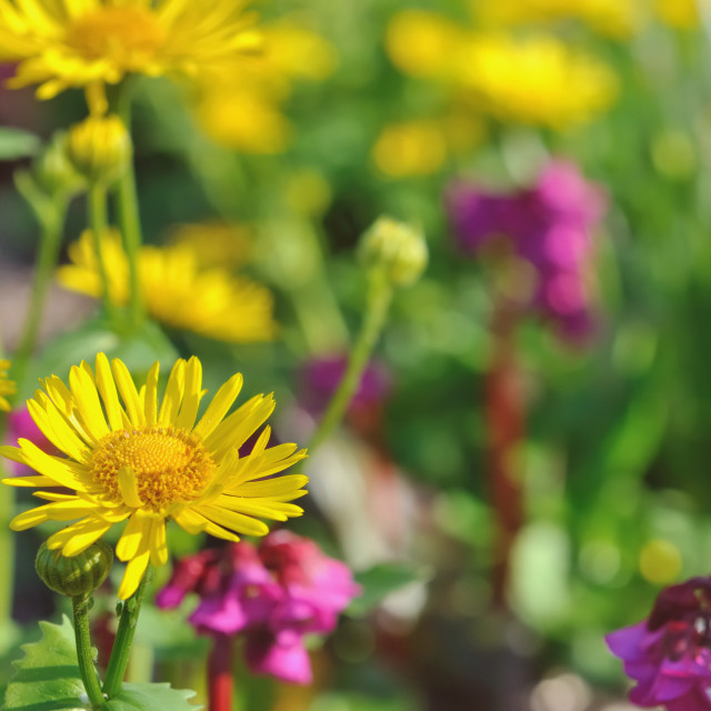 """""""colorful flowering"""" stock image"""