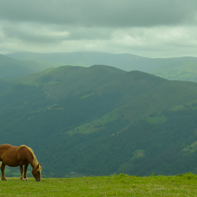 """Horse in solitude"" stock image"