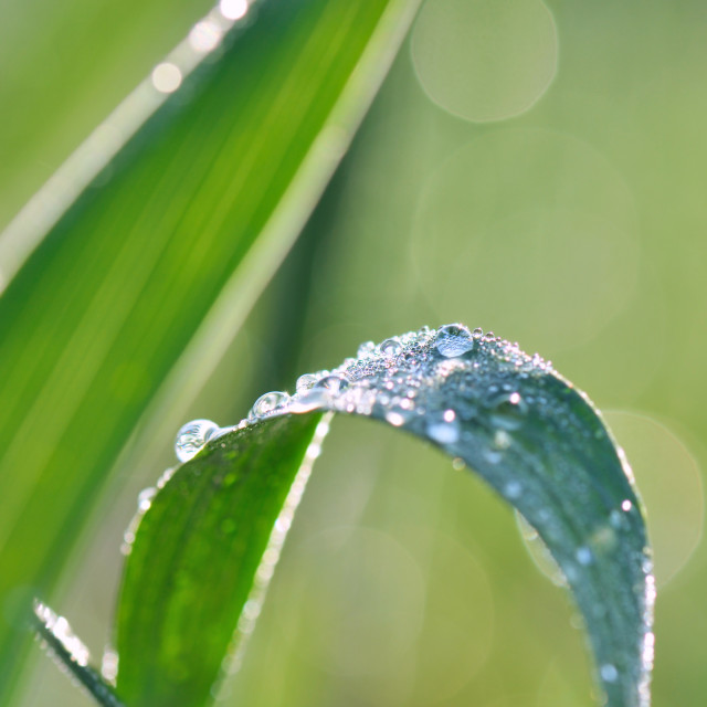 """leaf covered with dew"" stock image"