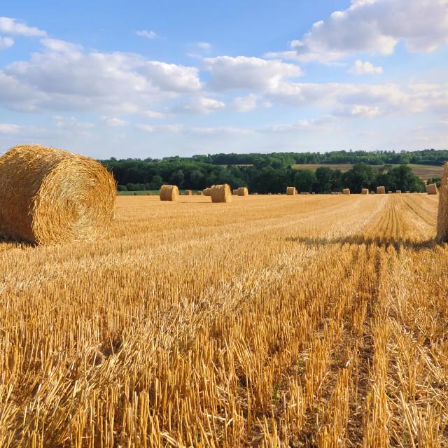 """haytacks in field"" stock image"