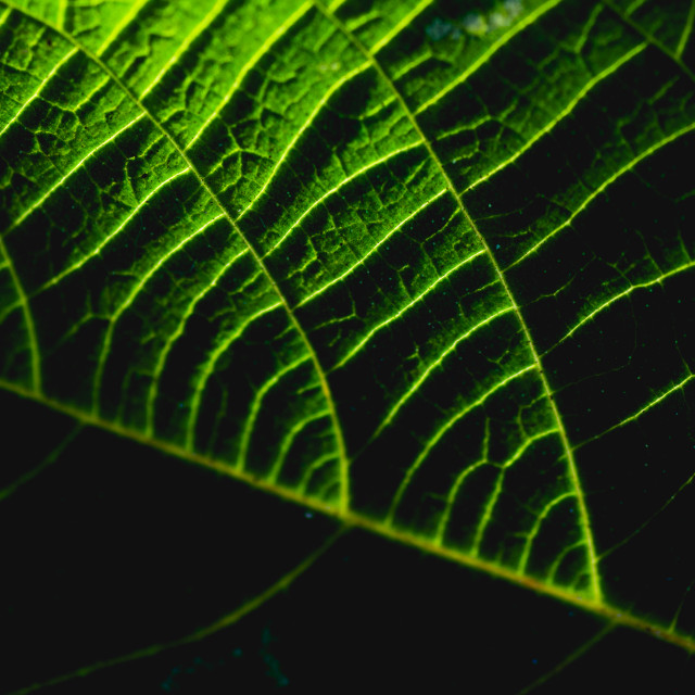 """Leaf Green"" stock image"