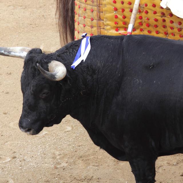 """brave bull"" stock image"