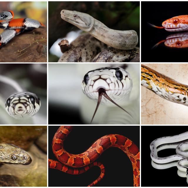 """snake collage"" stock image"