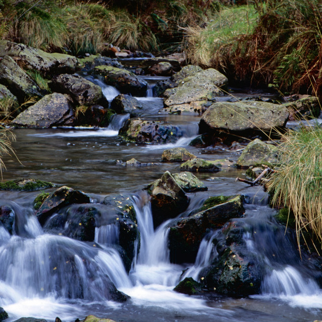 """Stream Beddgelert Forest"" stock image"