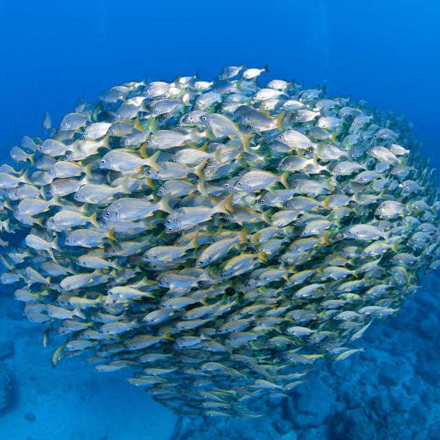 """shoal of fish"" stock image"