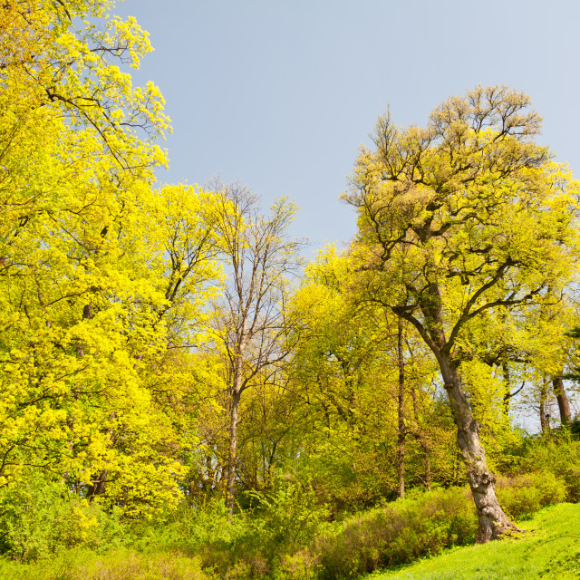 """spring trees foliage vibrant nature"" stock image"