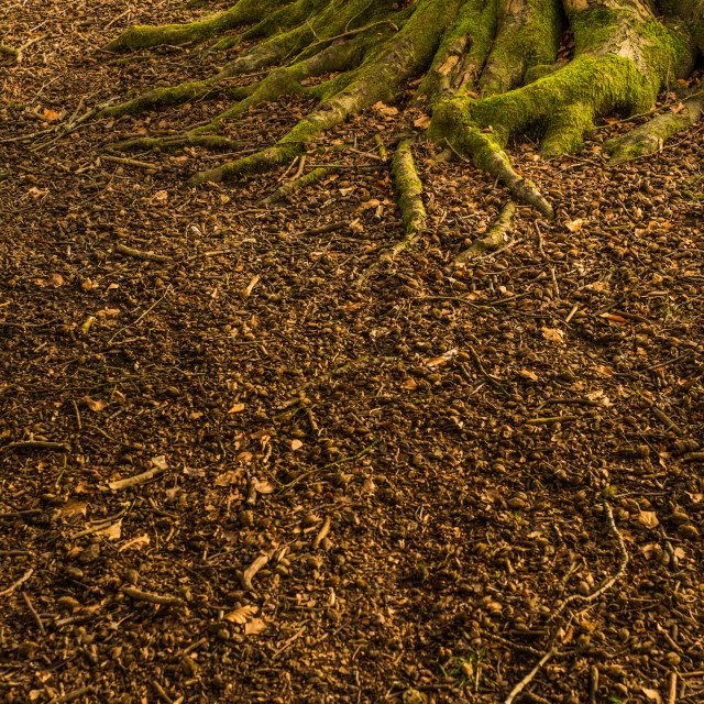 """Woodland floor"" stock image"