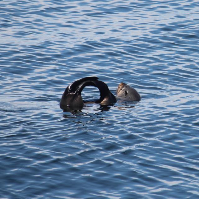 """Sunbathing seal"" stock image"