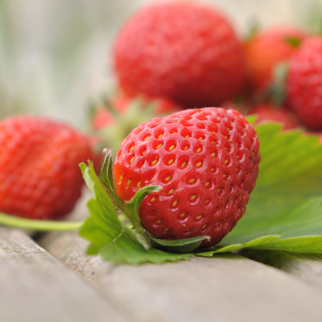 """delicious strawberry"" stock image"