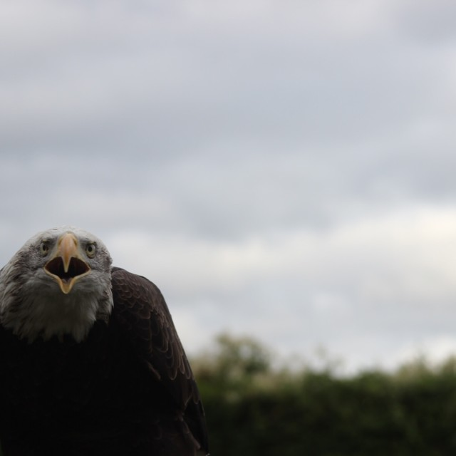 """""""Eagle warning"""" stock image"""