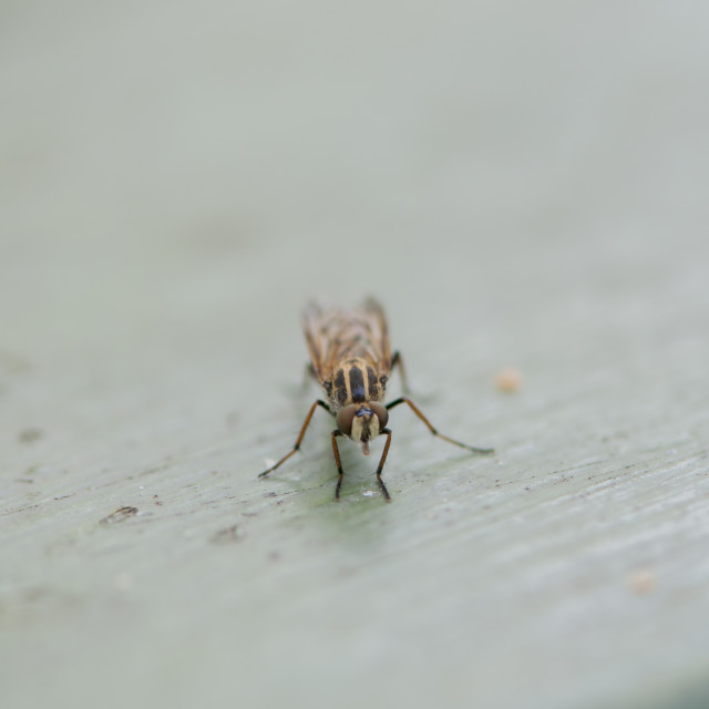 """""""fly perched"""" stock image"""
