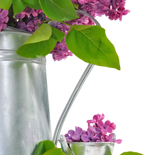 """decor with lilac"" stock image"