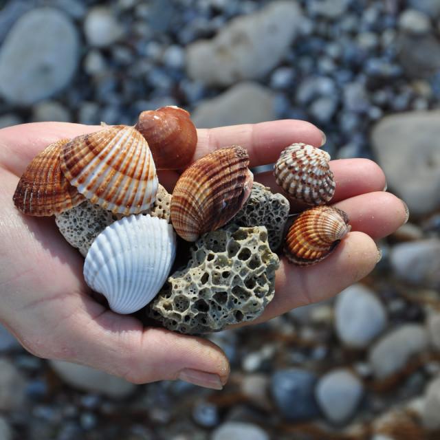 """sea shells and pumice stones"" stock image"