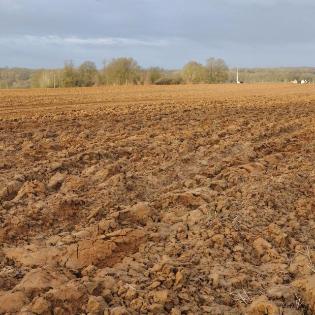 """""""agricultural landscape"""" stock image"""