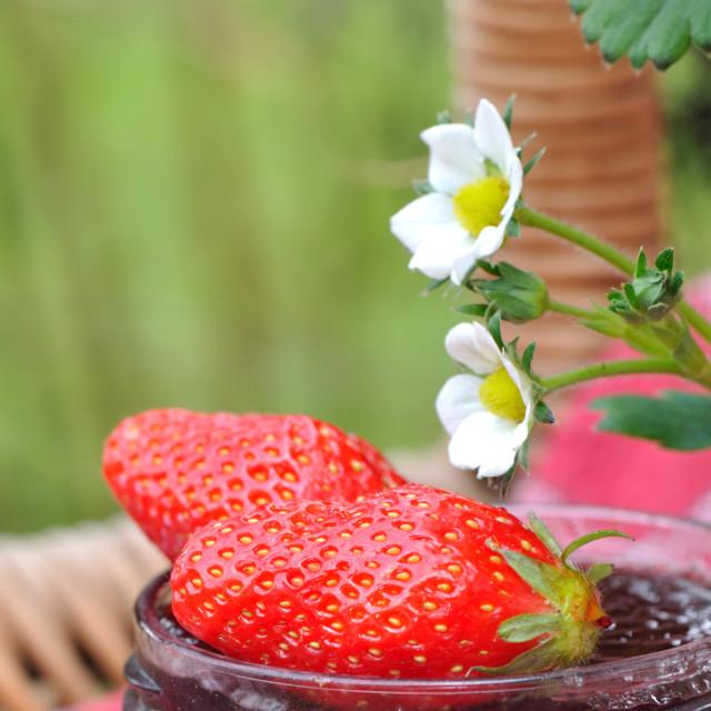 """delecious strawberries for jam"" stock image"