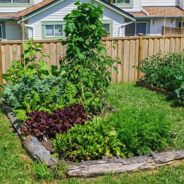 """Backyard gardening"" stock image"