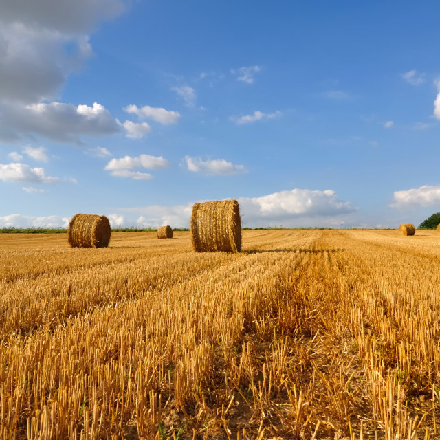 """golden bales in field"" stock image"