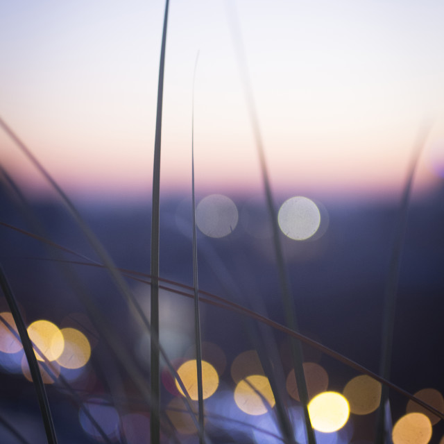 """Wild grass sunset silhouette"" stock image"