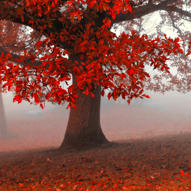 """The red tree"" stock image"
