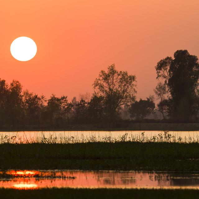 """Sunset in nepali swamp"" stock image"