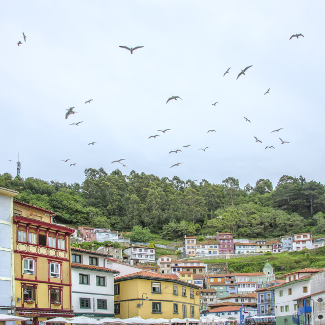 """Seagulls on Cudillero"" stock image"