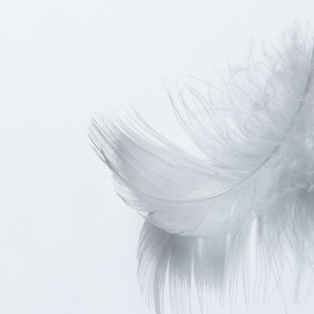 """White feather"" stock image"