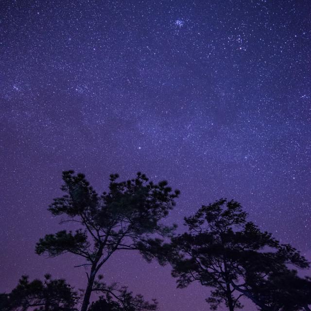 """Starling Starling Night"" stock image"