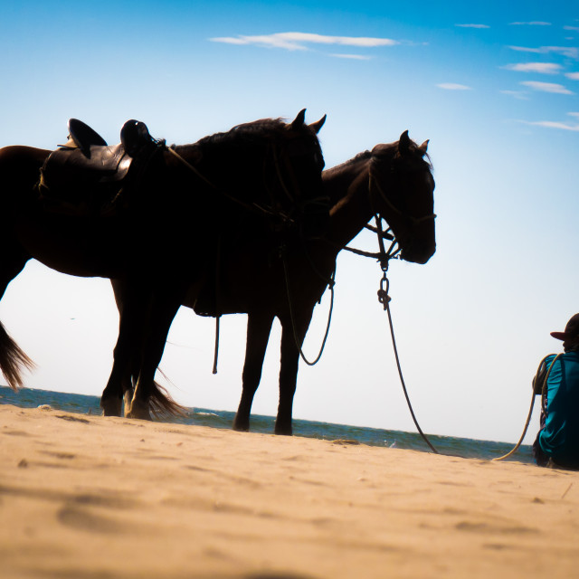 """""""Two Horses standing on beach sand with horse wrangler"""" stock image"""