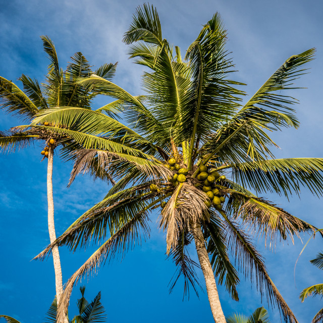 """""""Palm trees against bright blue sky"""" stock image"""