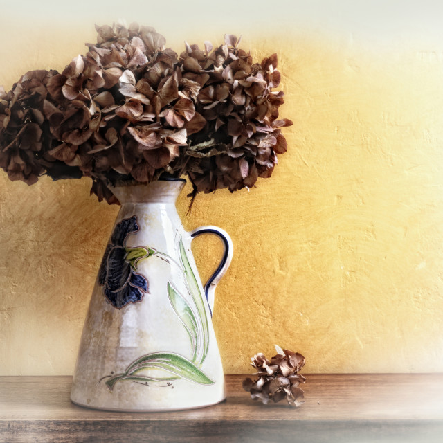 """vase with dried hydrangeas"" stock image"