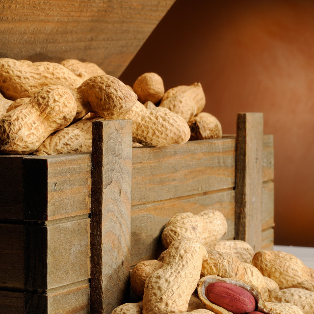 """group of peanuts on with trunk wooden container vertical composi"" stock image"