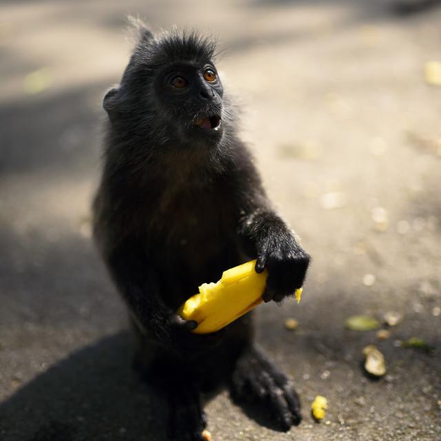 """""""The Shocking Monkey"""" stock image"""