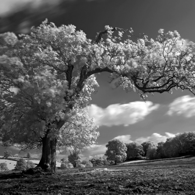 """A Tree blows in the Wind"" stock image"