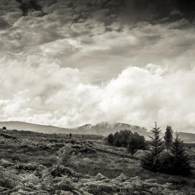 """Galloway Landscape"" stock image"