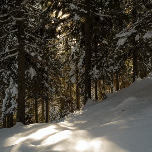 """""""Luce nel bosco (lights in the forest)"""" stock image"""