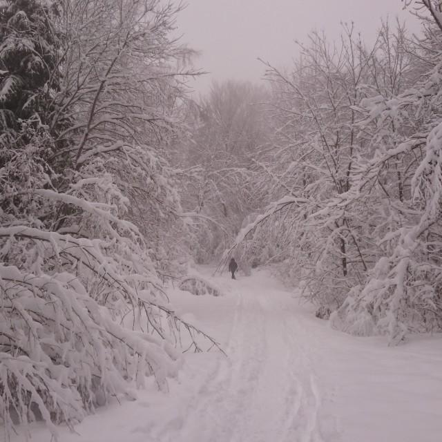 """Snowy walk"" stock image"