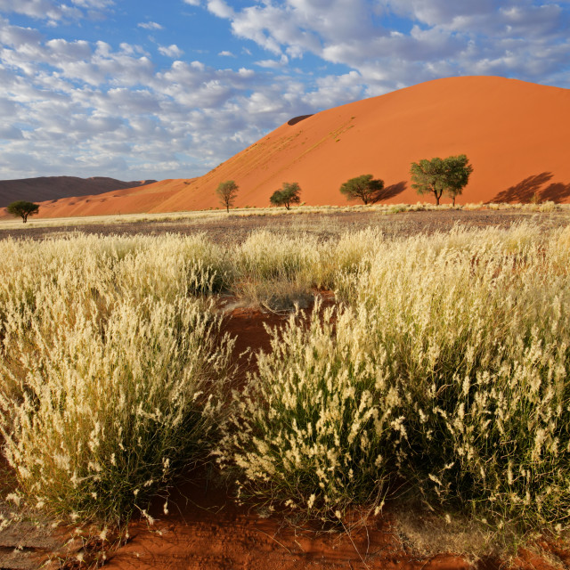 """""""Grass, dune and sky"""" stock image"""