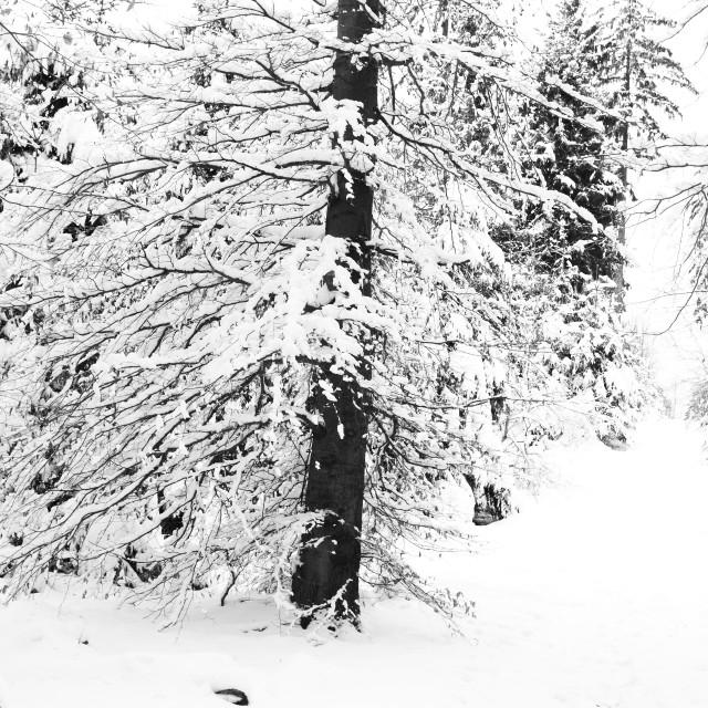 """Winter 10"" stock image"