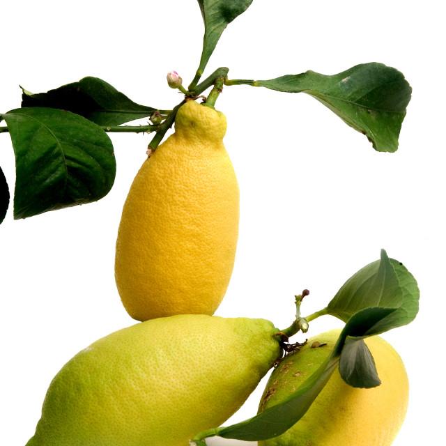 """lemons organic"" stock image"